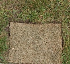 A Square of Dry Grass
